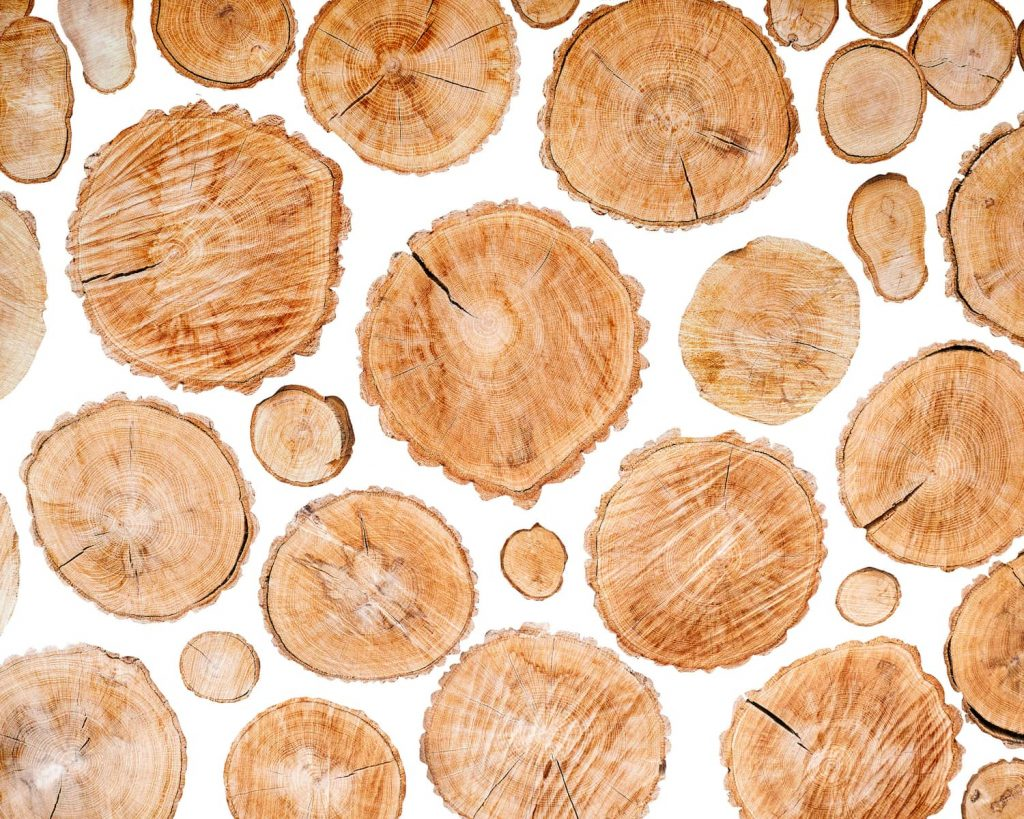 round wood slabs in white background