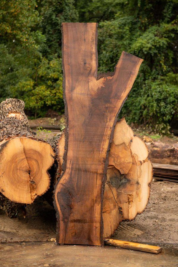 Black Walnut Live edge Slab next to logs