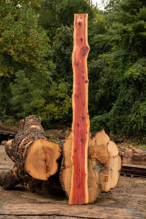tall Cedar slab next to uncut logs