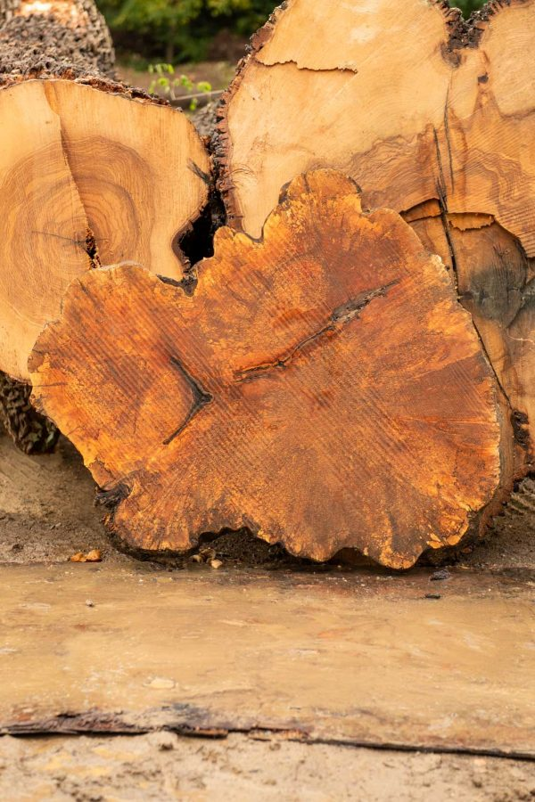 Maple Cookie Slab next to uncut logs