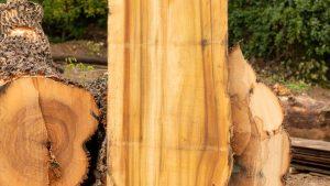 Poplar slab next to uncut logs